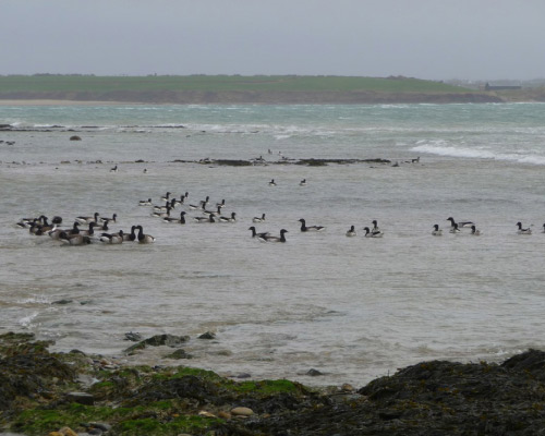 Coastal Wildlife, Hook Peninsula, Wexford - 1