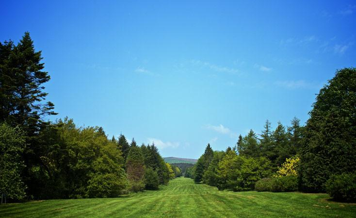 JFK Arboretorum, New Ross, Wexford