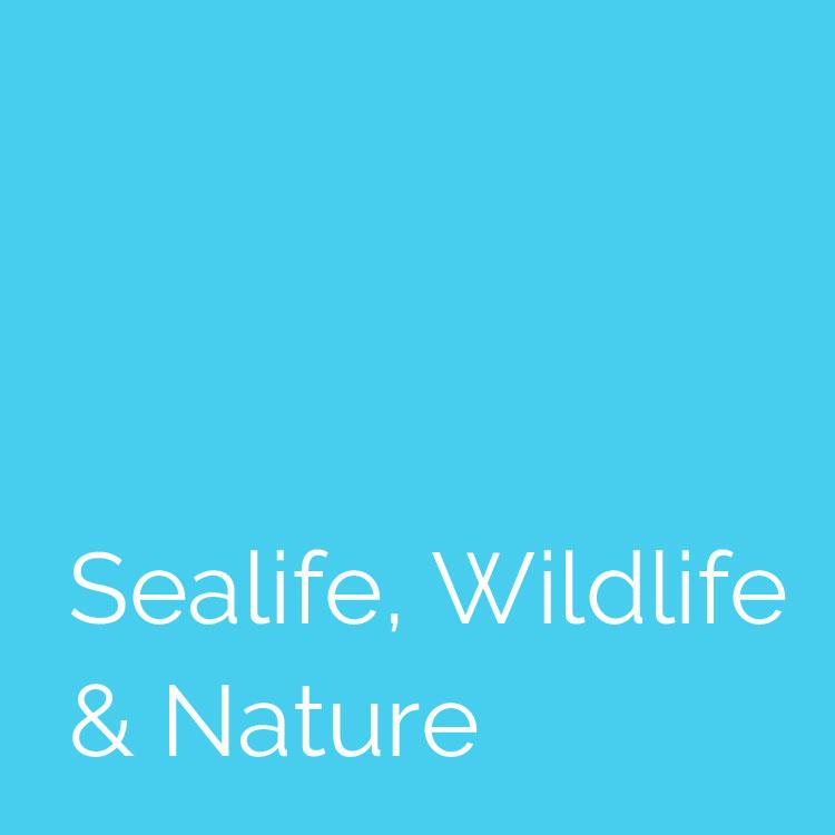 photo-sealife