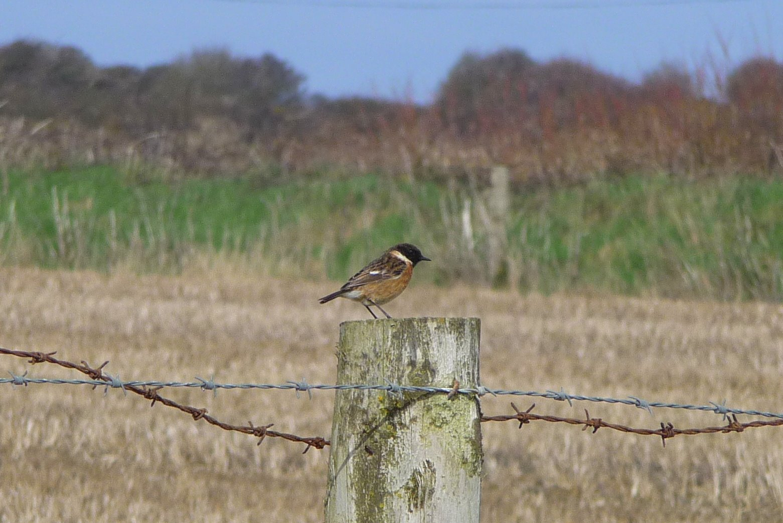 A small bird perched on a fence post